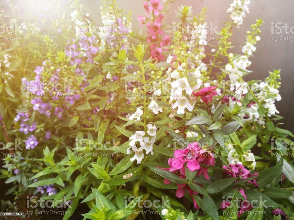Beautiful flowers in garden colorful flowers artificial light was beautiful flowers in garden colorful flowers artificial light was added on the top left izmirmasajfo