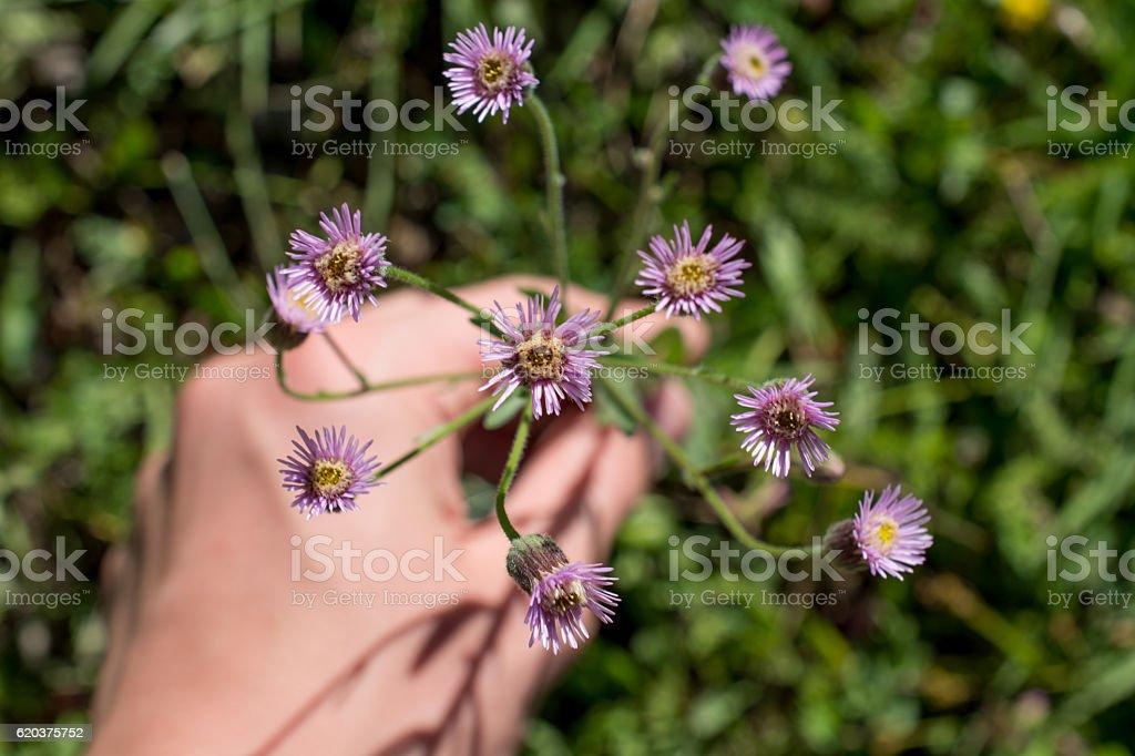 Beautiful flowers in hand zbiór zdjęć royalty-free