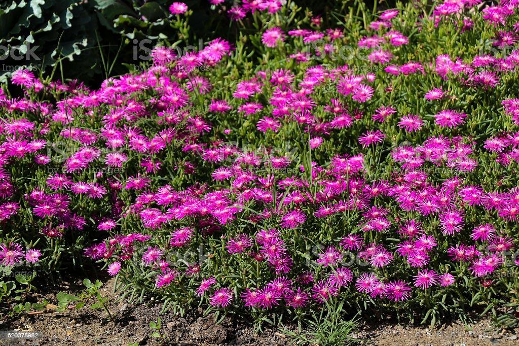 Beautiful flowers in nature foto de stock royalty-free