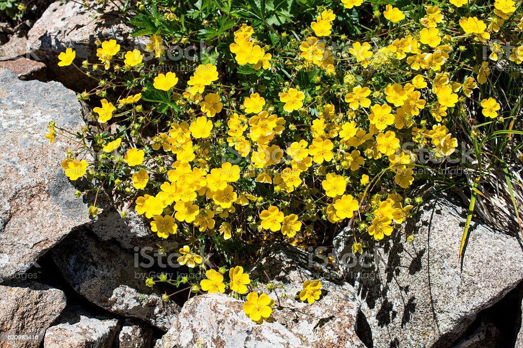 Beautiful flowers in nature foto royalty-free
