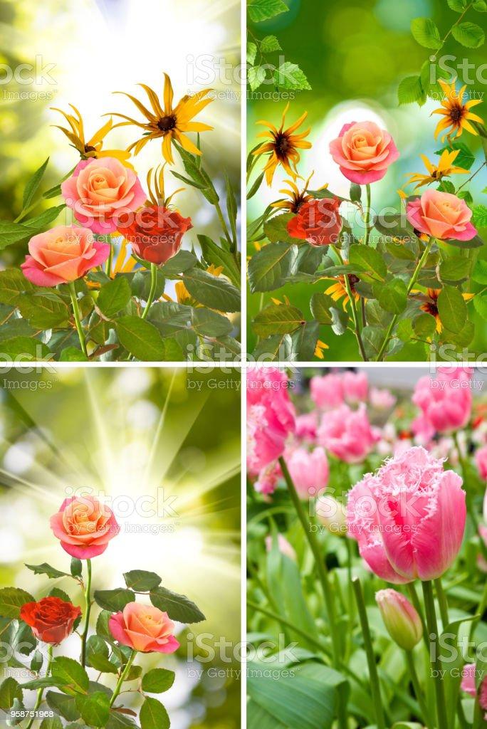 Schöne Blumen Im Garten Closeup Stock Fotografie Und Mehr Bilder Von