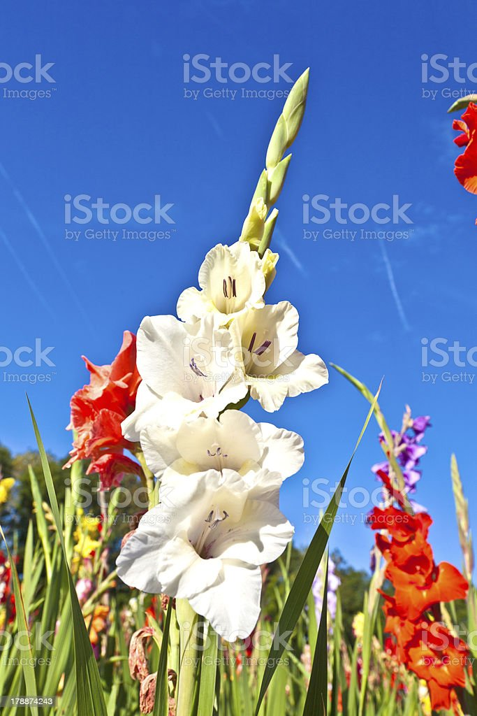 beautiful flowers in the meadow stock photo