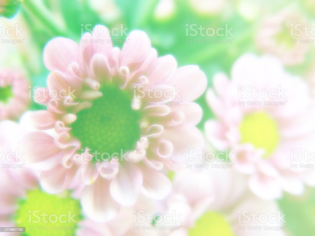 Beautiful Flowers Made With Color Filters Romantic Flowers