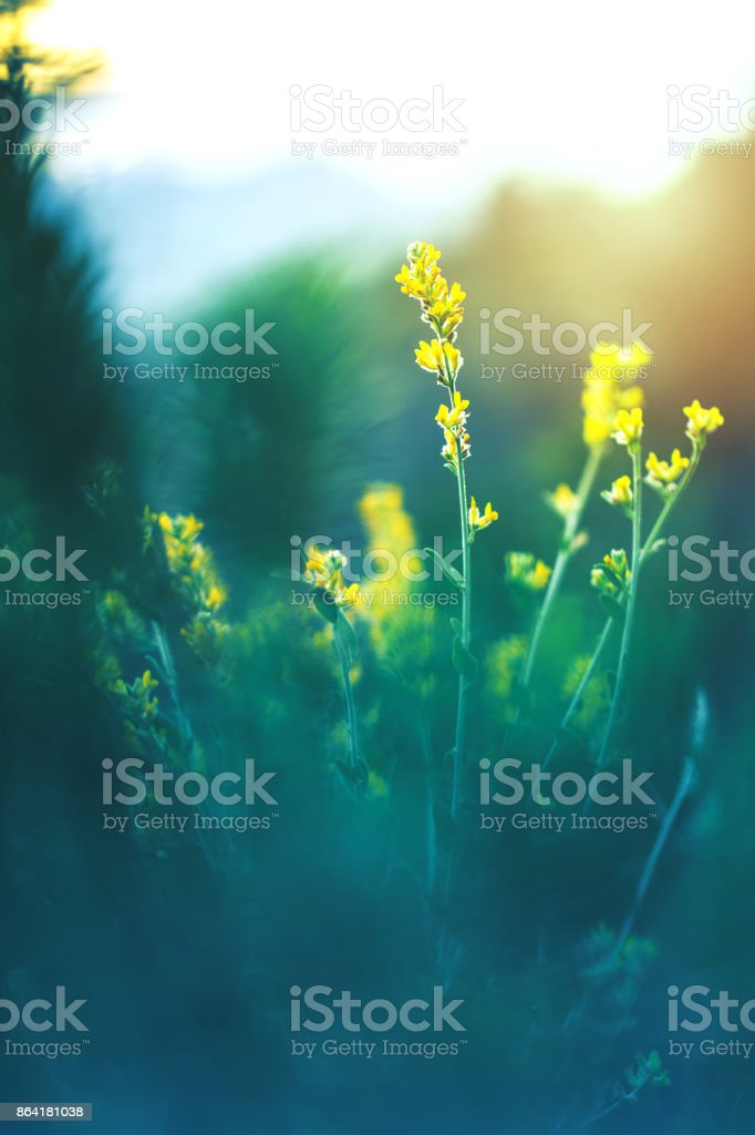 beautiful flowers nature background royalty-free stock photo