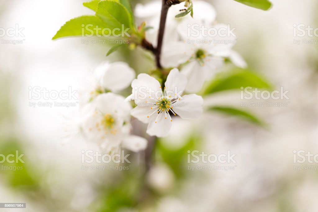 Beautiful flowers on a tree in the nature stock photo