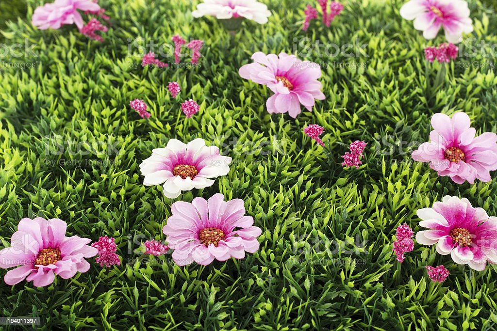 Beautiful flowers on grass royalty-free stock photo