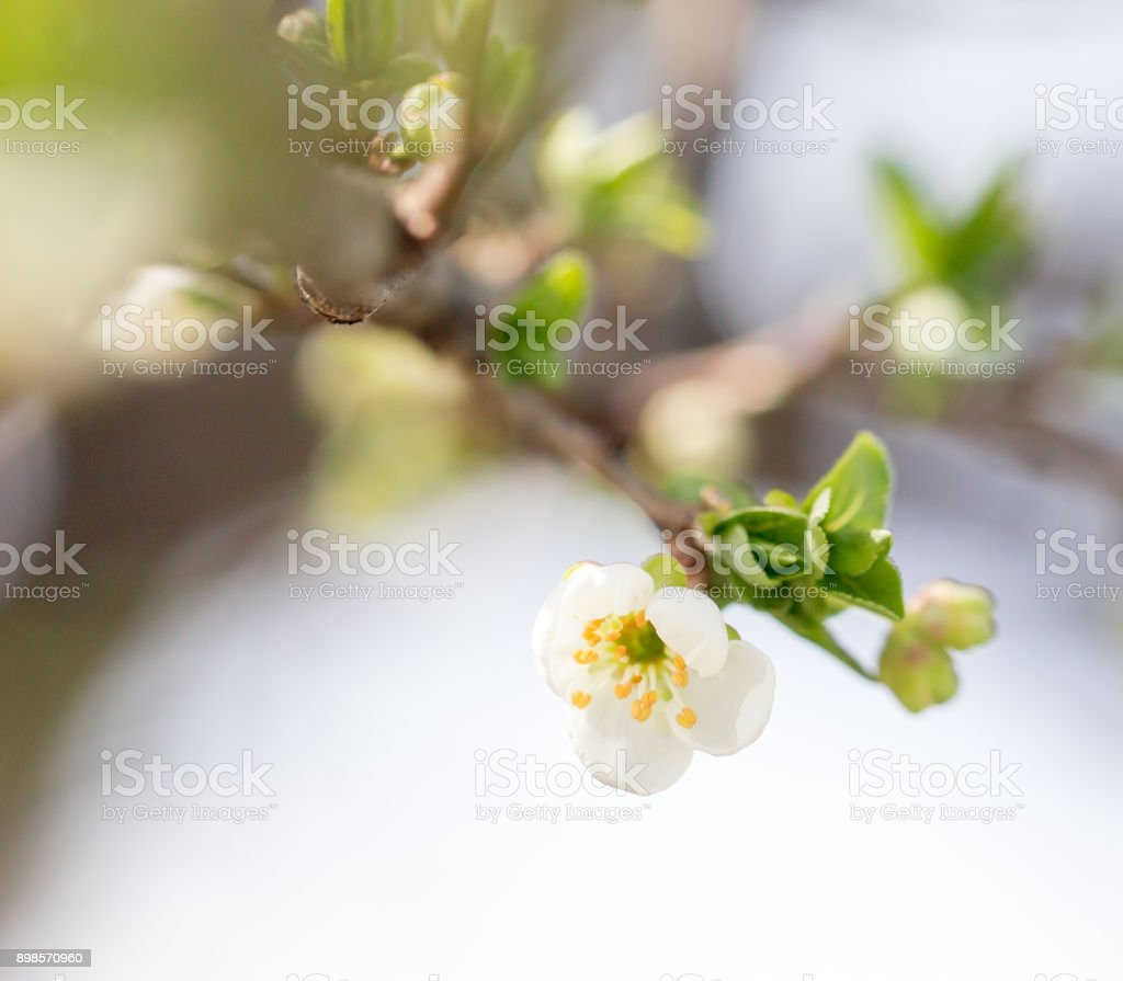 beautiful flowers on the tree in nature stock photo