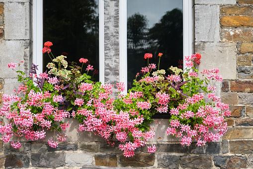 Beautiful flowers on window sills towards the backyard