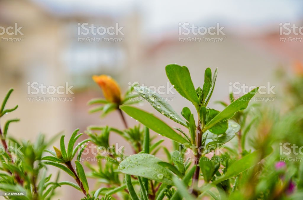 Beautiful flowers outside in the flowerbed on the balcon stock photo