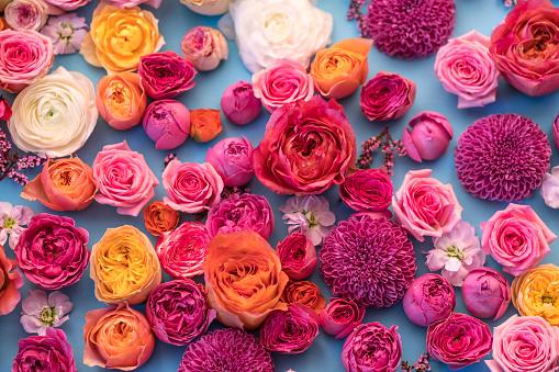 istock beautiful flowers 1028795066