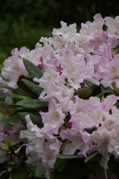 Cтоковое фото Beautiful flowers