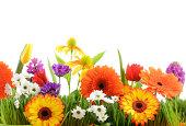 istock Beautiful flowers 163639089
