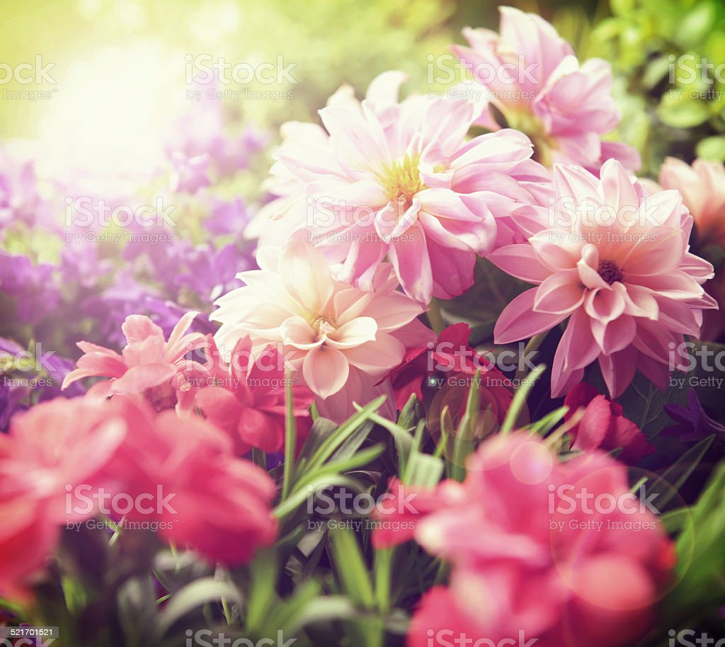 Beautiful flowers stock photo more pictures of agriculture istock beautiful flowers royalty free stock photo izmirmasajfo