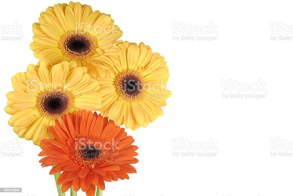 Красивые цветы Стоковые фото Стоковая фотография