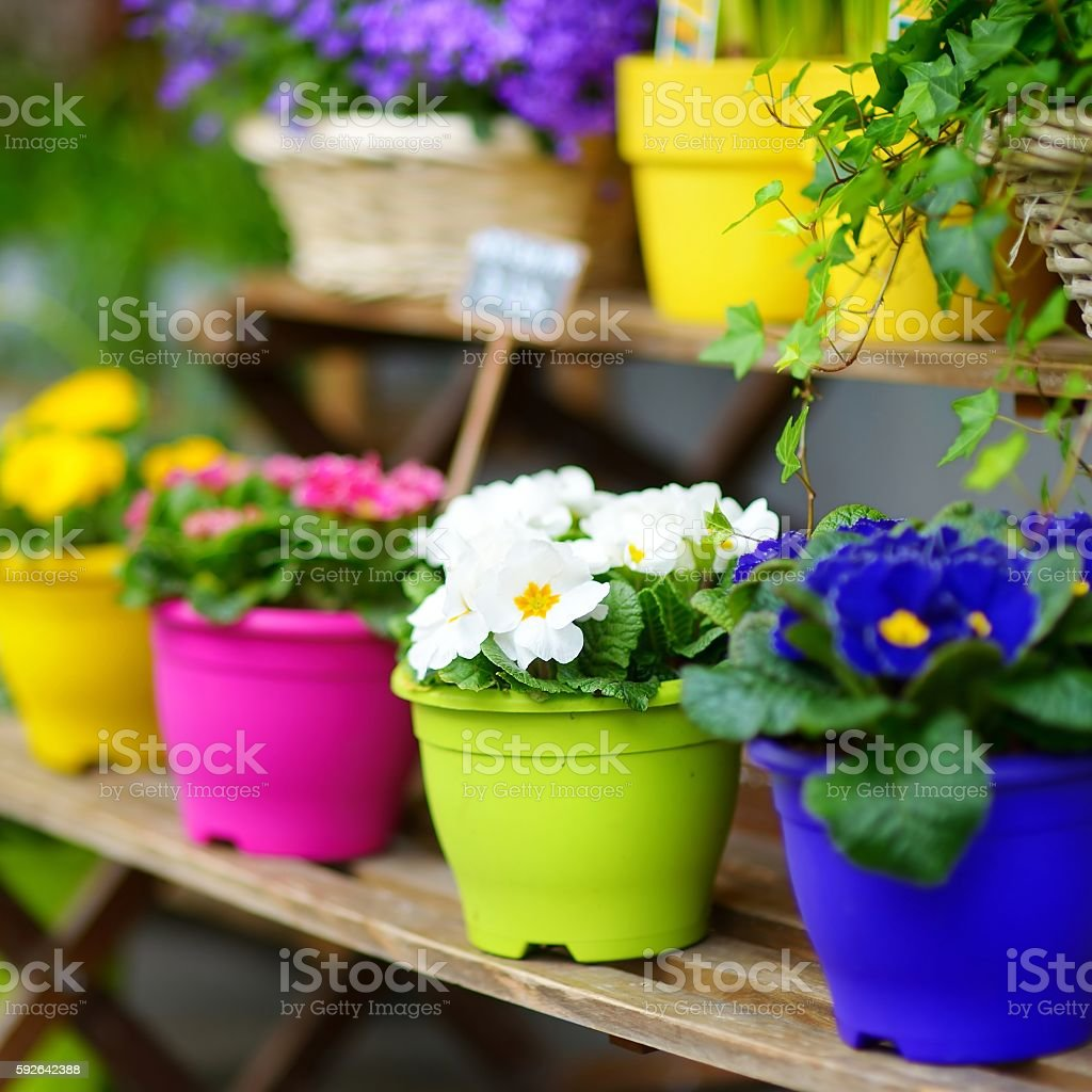 Beautiful flowers sold on outdoor flower shop stock photo more beautiful flowers sold on outdoor flower shop royalty free stock photo izmirmasajfo