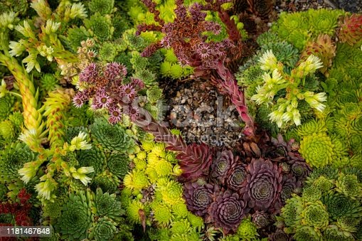 istock Beautiful flowers, trees and plants and garden landscaping 1181467648
