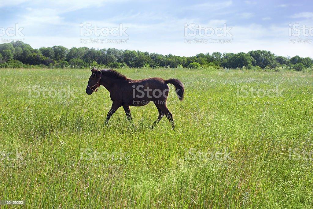 Beautiful foal stock photo