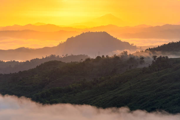beautiful foggy hills at sunrise Layers of foggy rainforest hills and terraced cultivated hill during sunrise with layers of beautiful morning light colors island of borneo stock pictures, royalty-free photos & images
