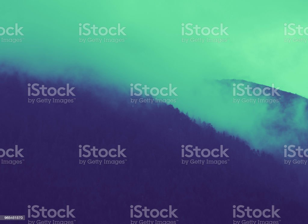 beautiful foggy mystic mountains. Fog clouds at the pine tree mystical woods, morning. Europe, mysterious alpine landscape. royalty-free stock photo