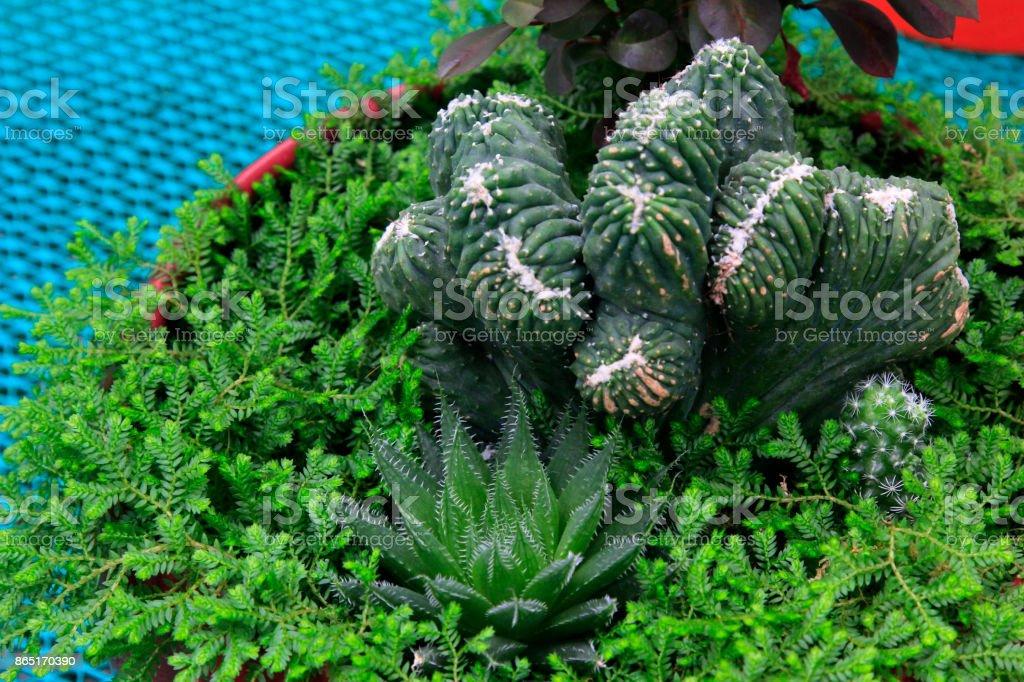 Beau feuillage plantes semis, agrandi de photo - Photo