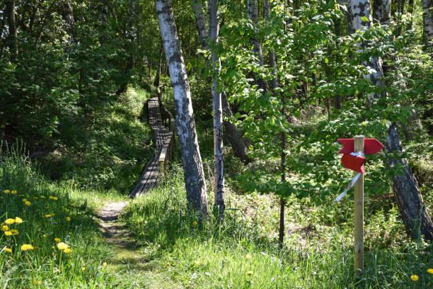 Beautiful footpath into a lush greenery stock photo