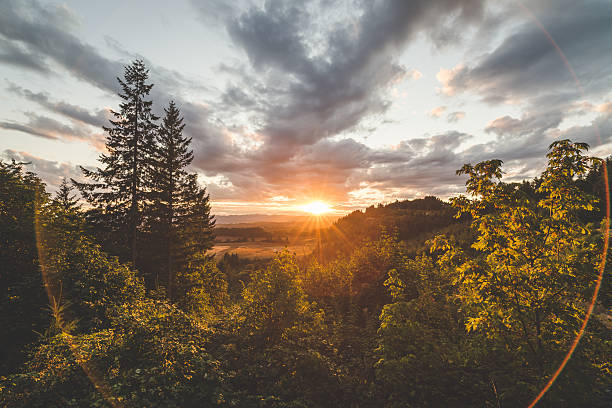 beautiful forest and valley sunset - non urban scene stock pictures, royalty-free photos & images