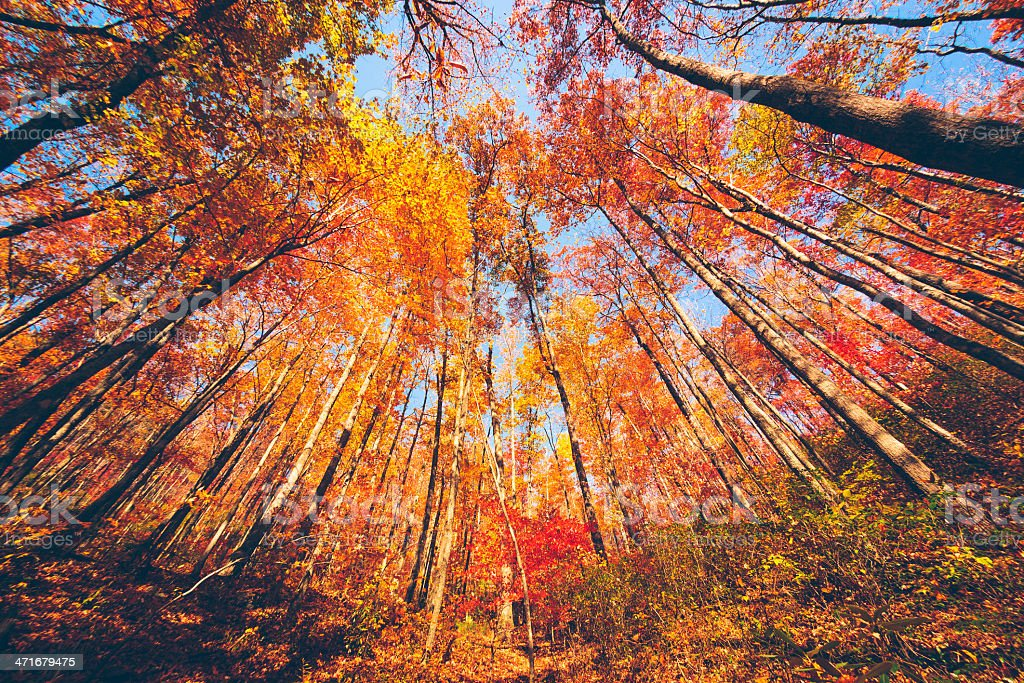 Beautiful Forest during Autumn royalty-free stock photo