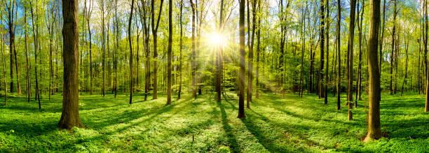Schönen Wald bei strahlendem Sonnenschein – Foto