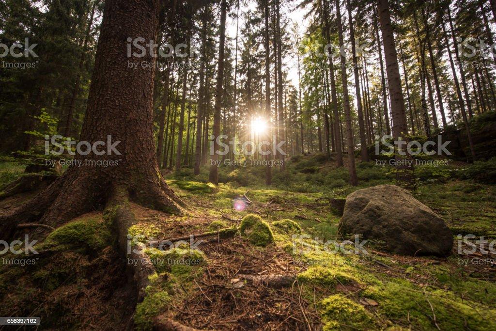 Beautiful forest in saxon switzerland, Germany, Europe stock photo