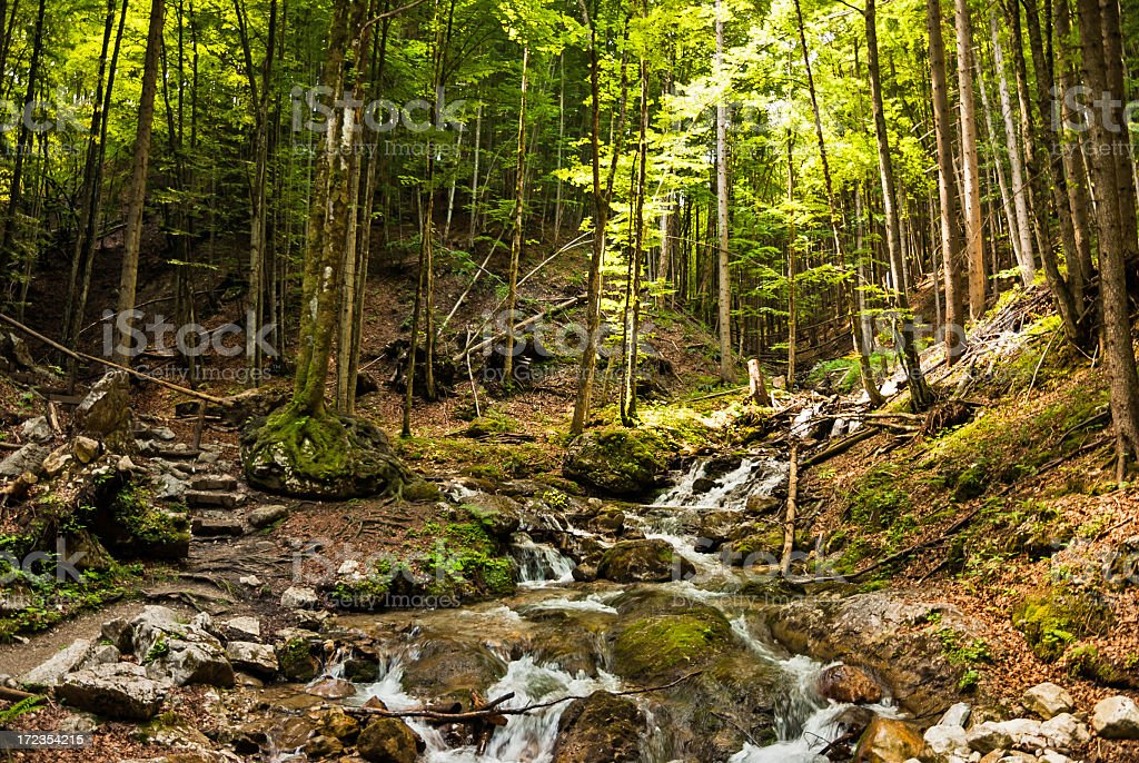 Beautiful forest in summer royalty-free stock photo