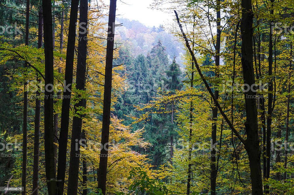 Beautiful forest on a cold autumn morning in Austria stock photo