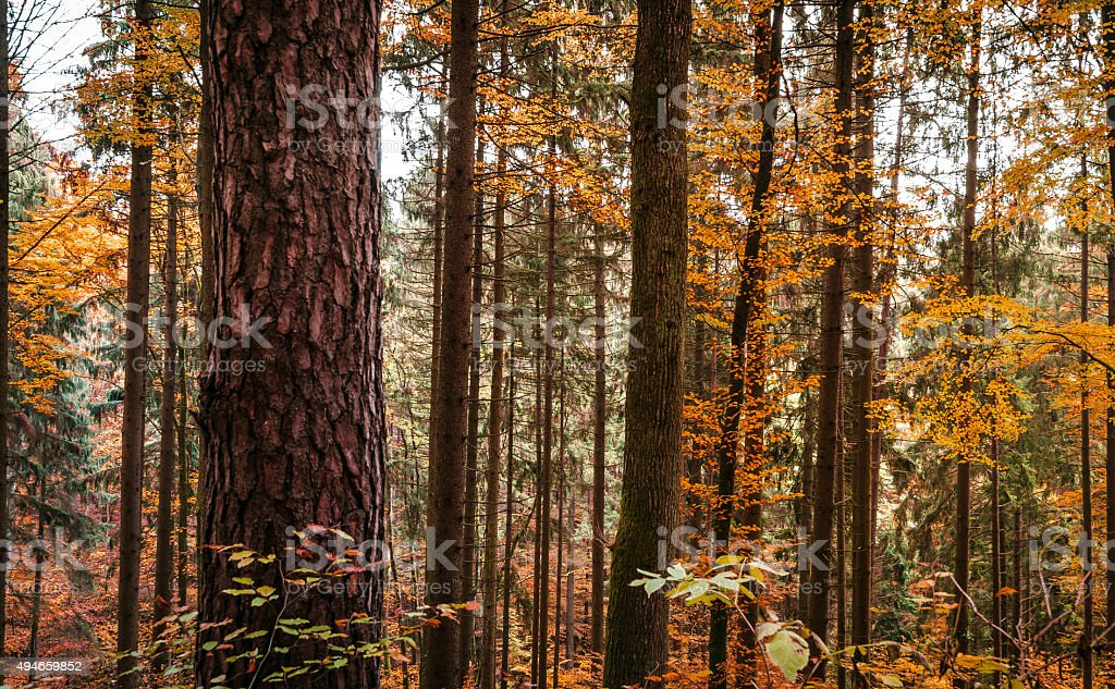 Beautiful forest on a warm autumn morning in Austria stock photo