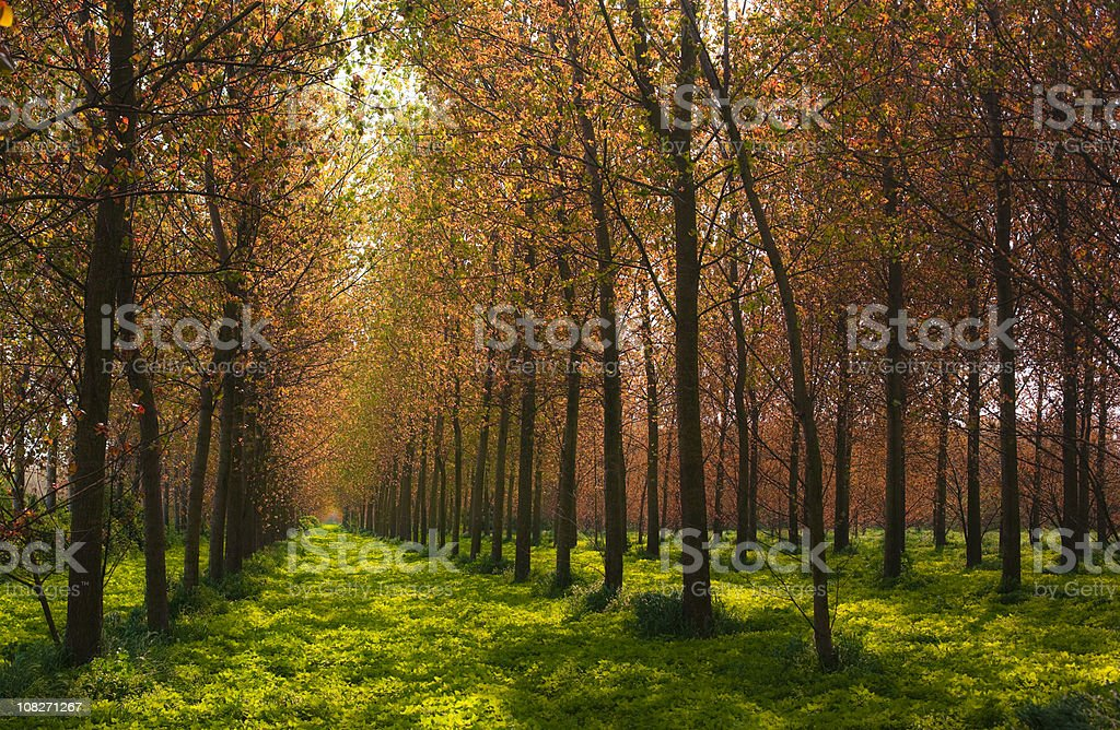Beautiful forest royalty-free stock photo