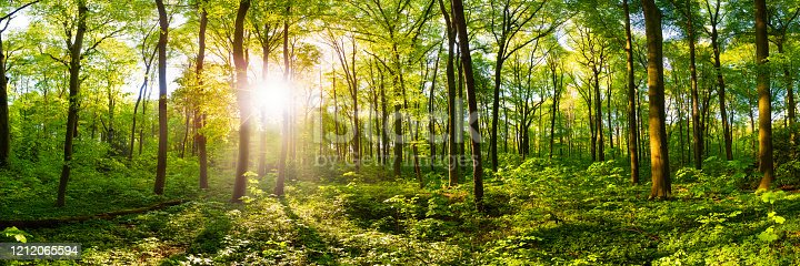 istock Beautiful forest 1212065594