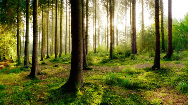 Beautiful forest - Photo
