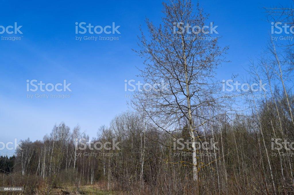Beautiful forest zbiór zdjęć royalty-free