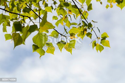 istock Beautiful forest 859474896