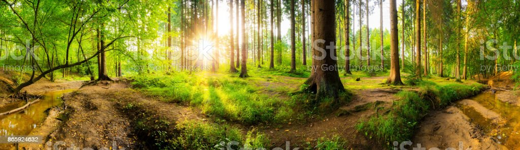 Beautiful forest stock photo