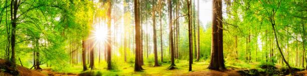wunderschönen forest  - baumwipfelpfad stock-fotos und bilder