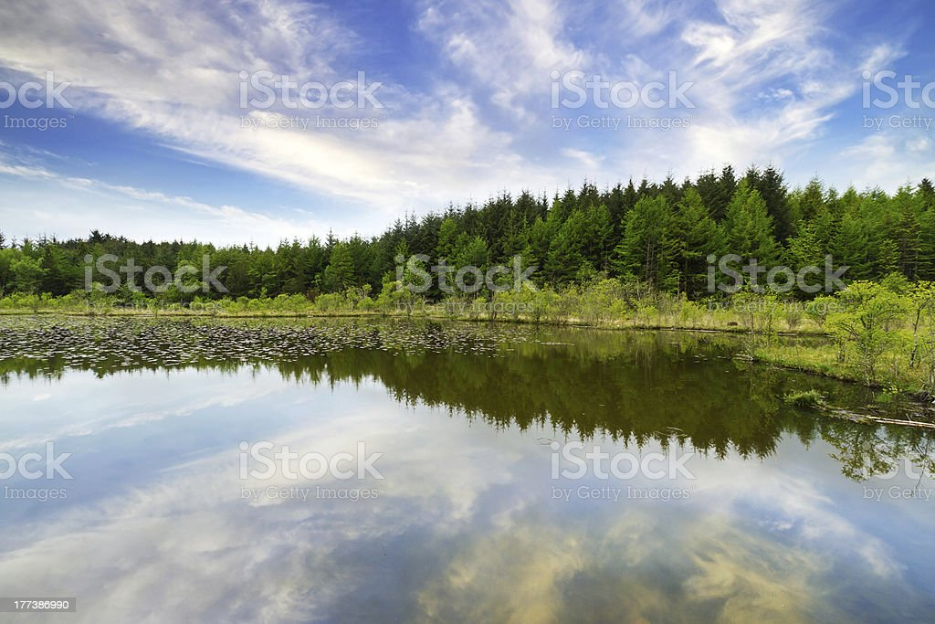 Beautiful forest reflected in the lake stock photo
