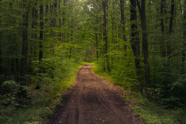 Beautiful forest with a muddy dirt road crossing it in the middle stock photo