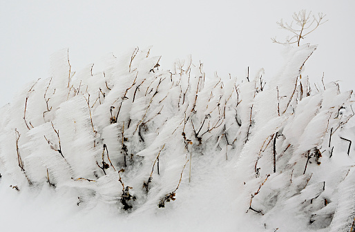 istock Beautiful freeze vegetation 636005908