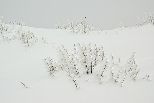 istock Beautiful freeze vegetation 636006926