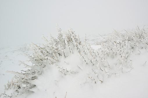 istock Beautiful freeze vegetation 636007250