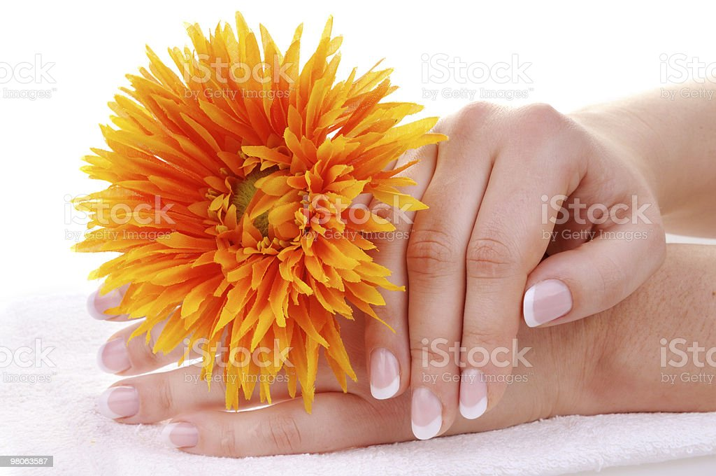 Beautiful french manicure and flower royalty-free stock photo