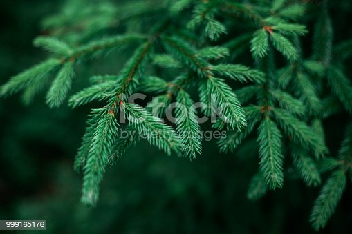 Christmas Tree, Pine Wood, Christmas, Wallpaper - Decor, Decoration