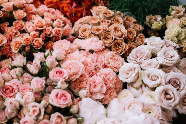 Beautiful fresh delivery of blossoming flowers at the florist shop picture id1128917607?b=1&k=6&m=1128917607&s=612x612&w=0&h=i8posbi4gbomsmgcz4aj3egkbvllicsz23ymbk0sx g=