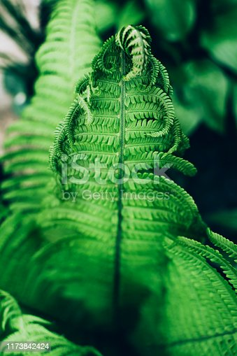 Beautiful fresh green fern leaves. Natural floral background. Greenery spring concept.
