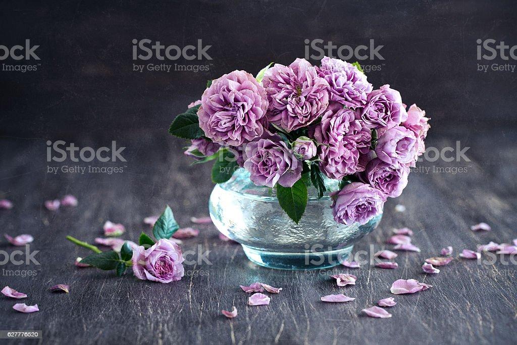 Beautiful fresh purple roses stock photo