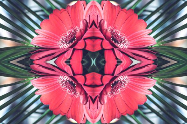 beautiful fresh red gerbera flowers macro surreal shaped symmetrical kaleidoscope - kollagenblätter stock-fotos und bilder